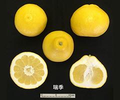 f1_mizuki.jpg