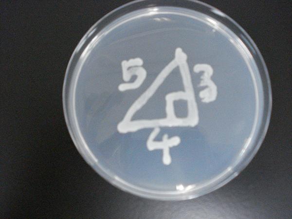 microbial_art09.jpg