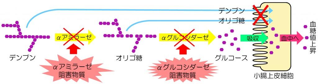 enzyme-1024x271.jpg
